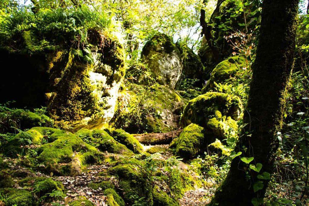 Korcula hiking to Kocje protected area