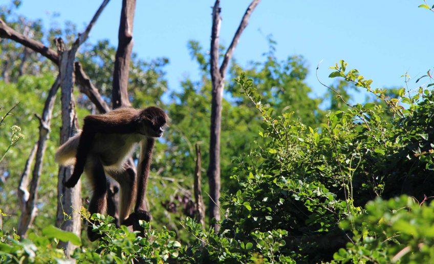 Eco-Adventure parks to visit Mayan Riviera