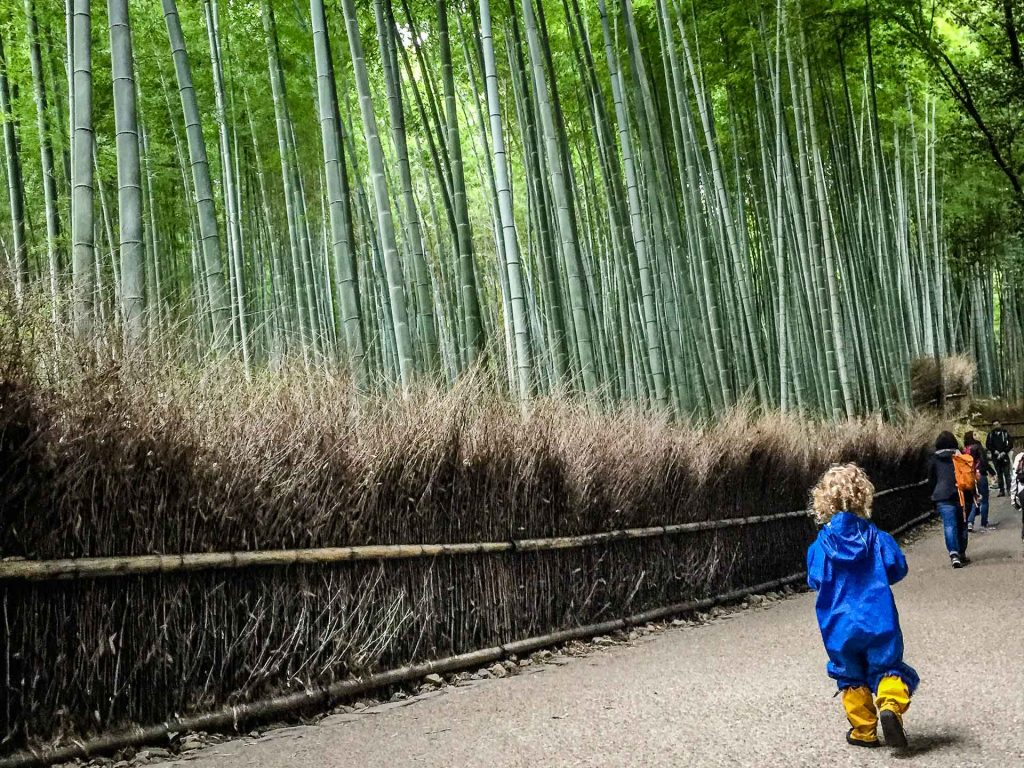 A toddler wanders through Kyoto's bamboo forest