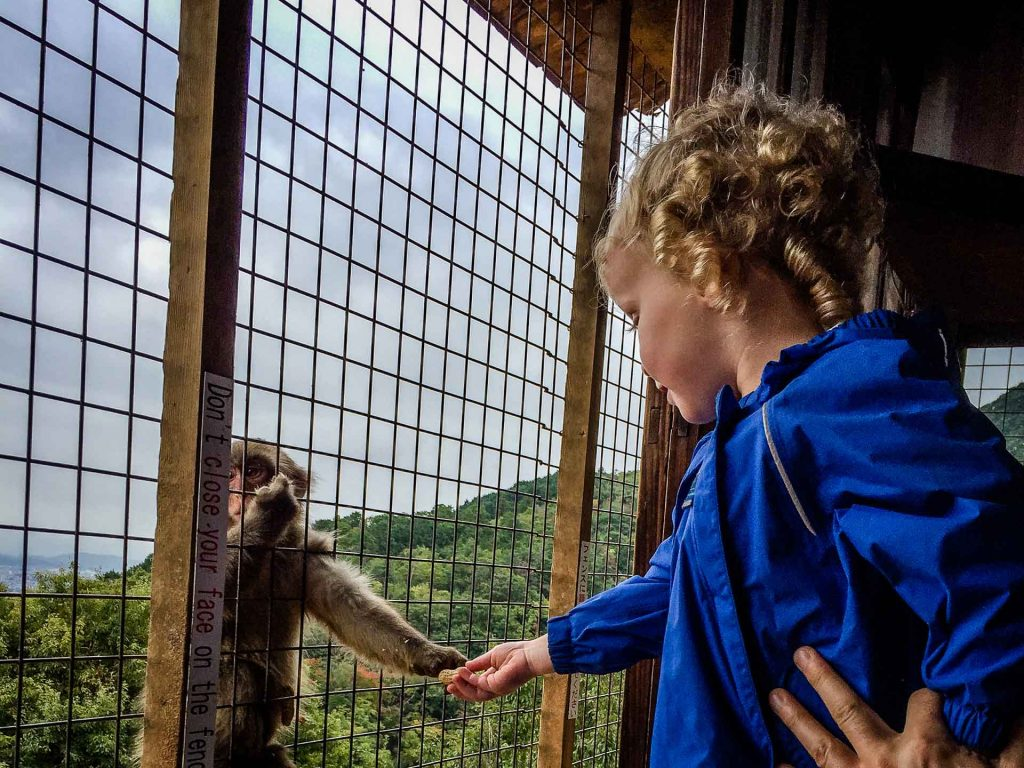 a child feeds a monkey in Kyoto