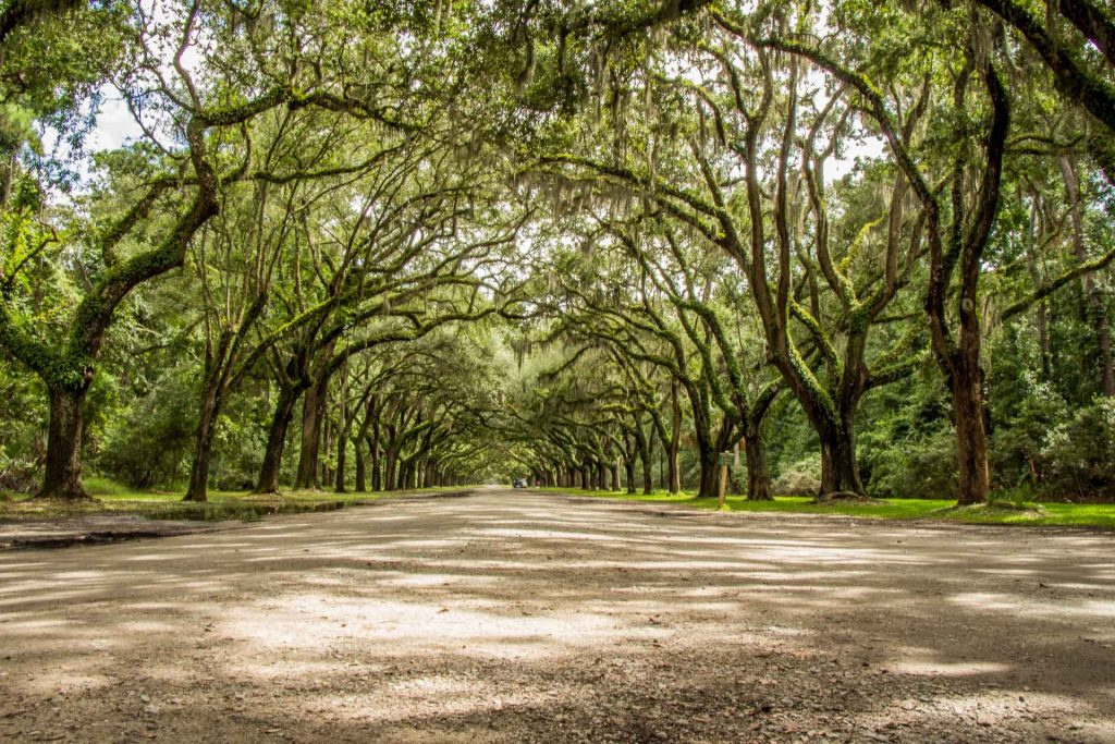 southern usa road trip planner - 2 Days in Savannah with Kids - Wormsloe Historic Site