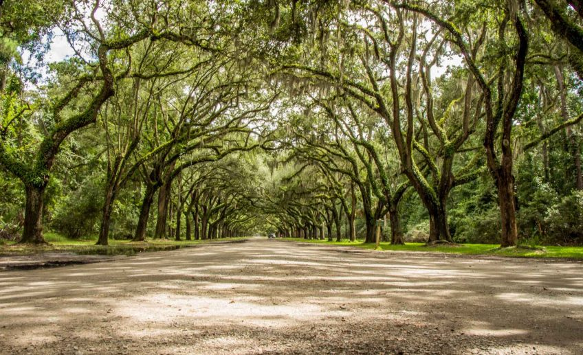 Family Can Travel - 2 Days in Savannah with Kids - Wormsloe Historic Site - Long Row of Oaks and Spanish moss - Feature Image