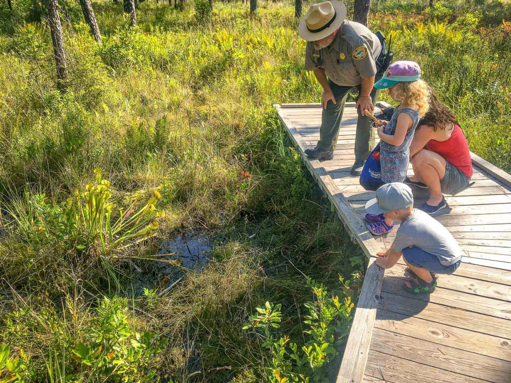 destination ideas for southern states road trip with kids Wilmington, NC - carnivorous plants at Carolina Beach State Park