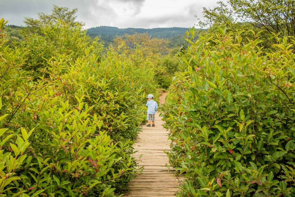 Family Can Travel - Family Friendly Hikes Along the Blue Ridge Parkway - Graveyard Fields - our three year old ate any blueberries - ripe or not