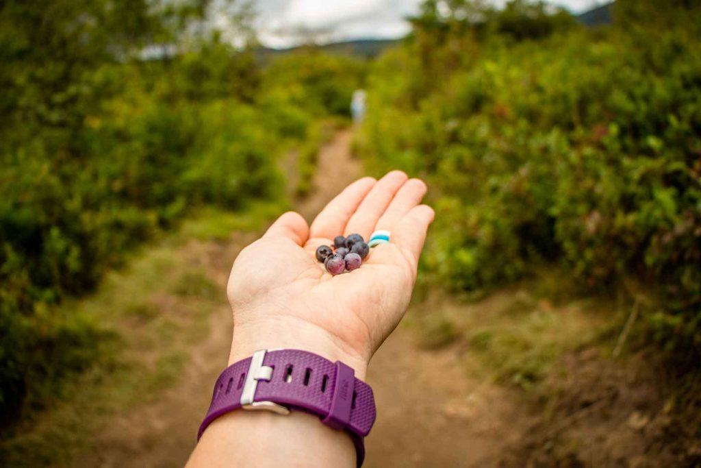 Fun things to do on the Blue Ridge Parkway with kids - picking berries at Graveyard Fields