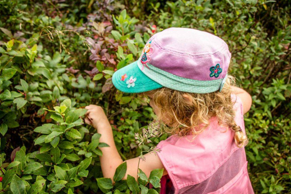 hiking Blue Ridge Parkway - Graveyard Fields wild berry season - looking for ripe wild blueberries