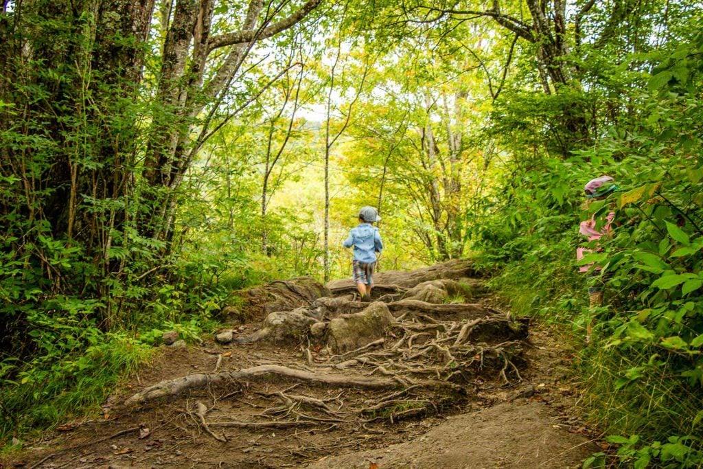 easy blue ridge parkway trails -  Graveyard Fields - looking for wild berries