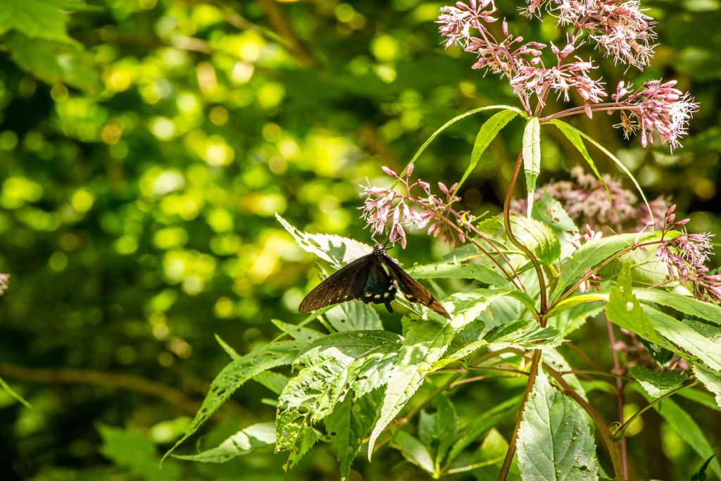 Family Can Travel - Family Friendly Hikes Along the Blue Ridge Parkway - Mount Mitchell - the kids loved the butterflies