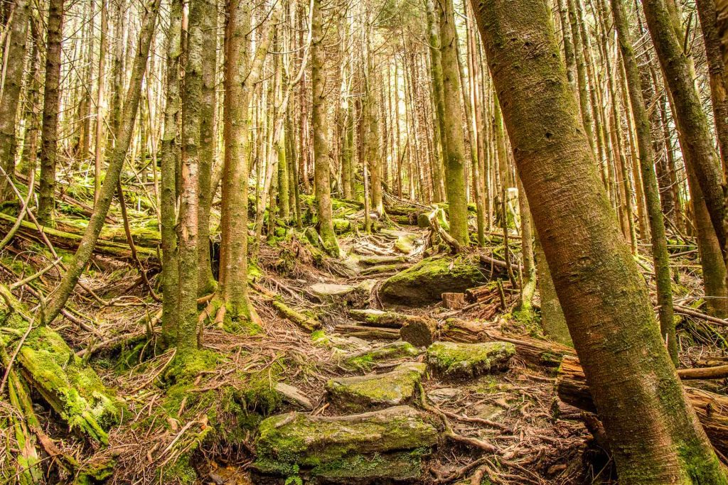 Best Blue Ridge Parkway hikes - Mt. Mitchell Trail has an emerald green forest