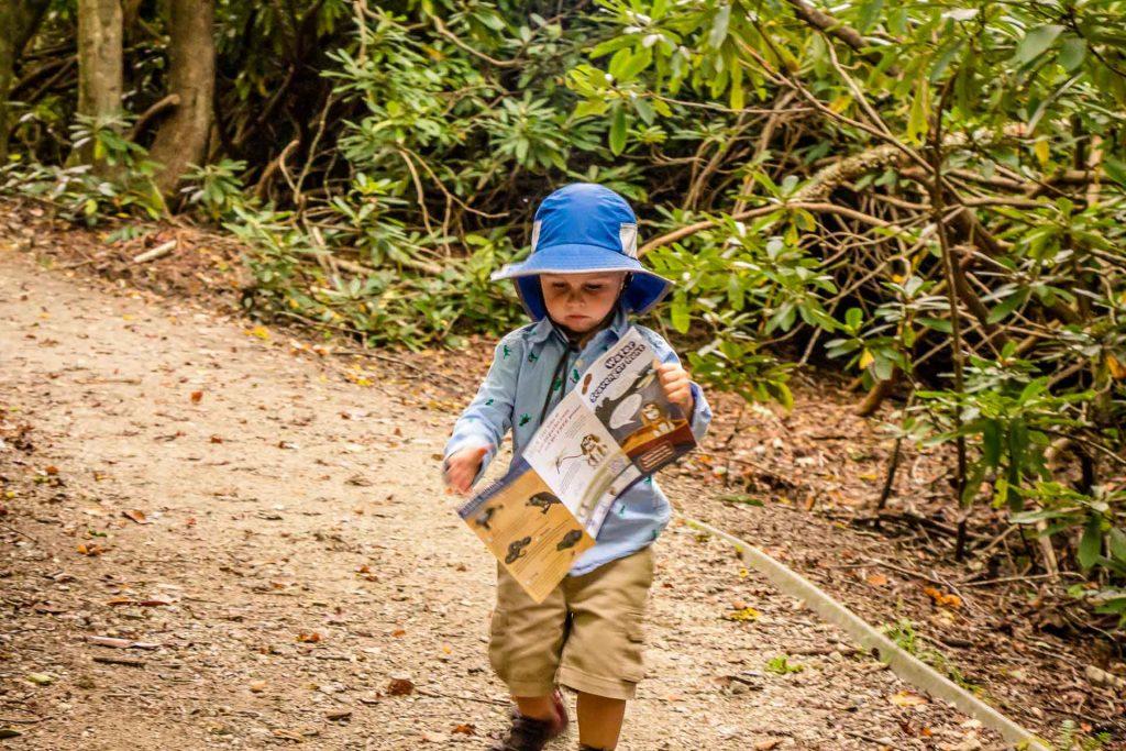 Price Lake - Blue Ridge Parkway easy hikes with kids