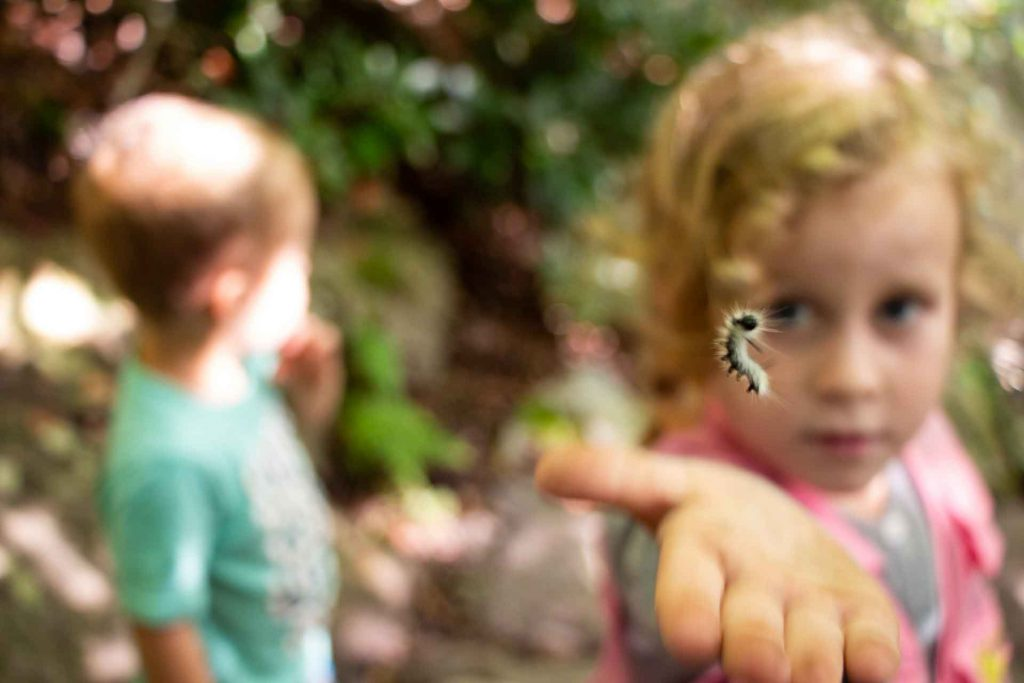 Family road trip on Blue Ridge Parkway - the kids loved the caterpillars