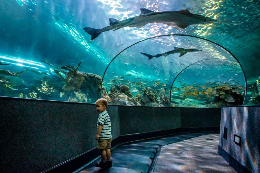 best destinations southern states road trip with kids - Gatlinburg, TN-  Ripley's Aquarium of the Smokies