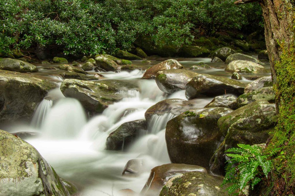best destinations road trip southern usa - Great Smoky Mountains - Porters Creek Trail