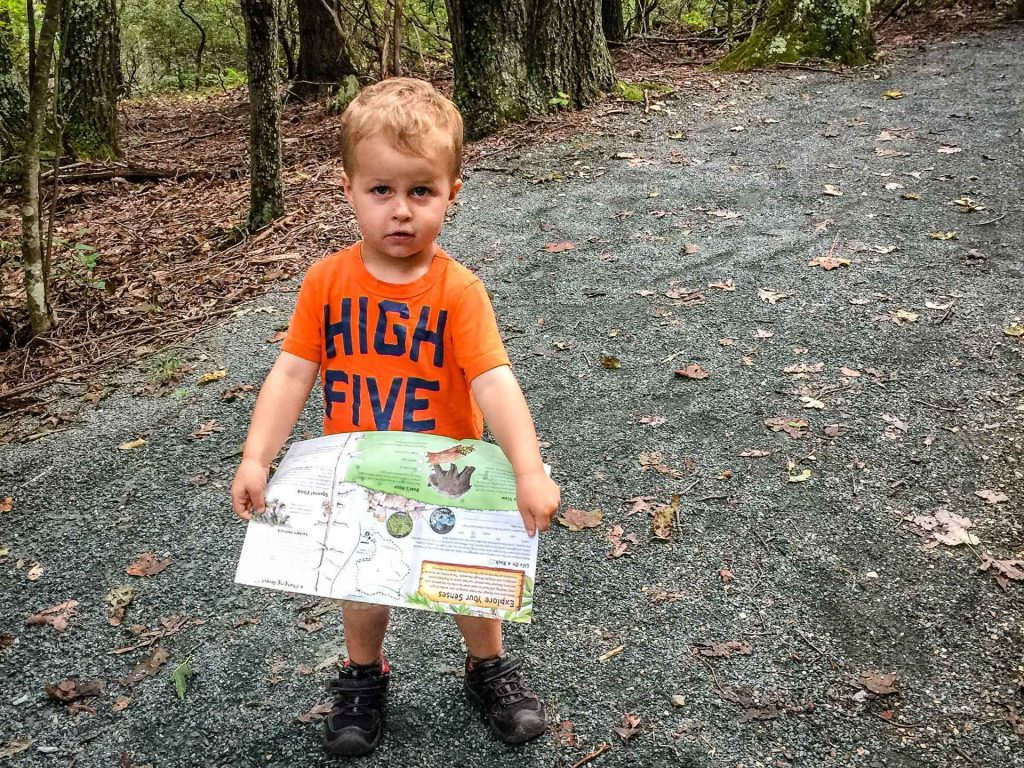 Shenandoah road trip with kids - Limberlost Trail