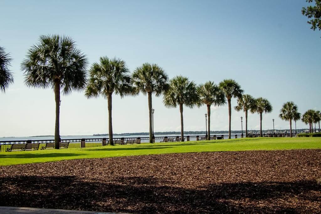 trees along Charleston Waterfront Park