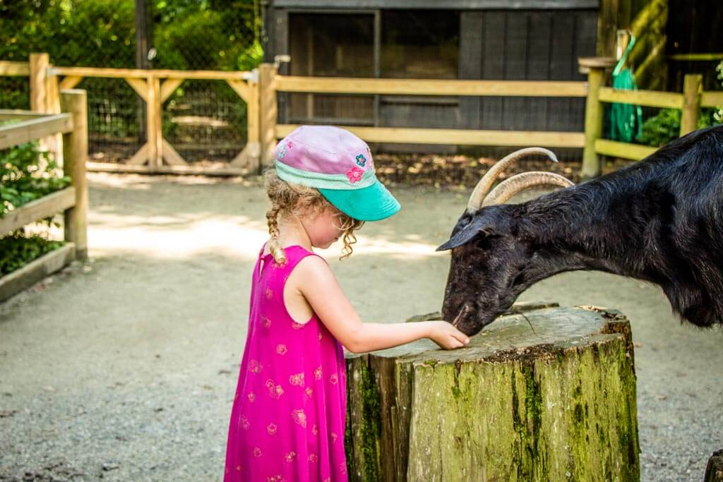 visiting the Magnolia Plantation Zoo with Kids
