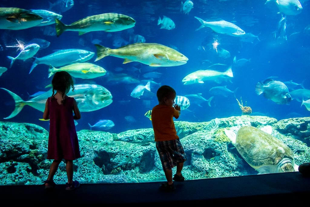 southern states road trip with kids - 48 Hours in Charleston, SC - Charleston Aquarium