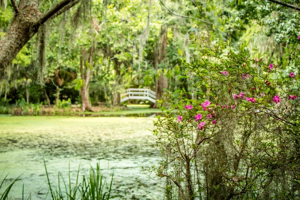 walk through Magnolia Plantation Garden