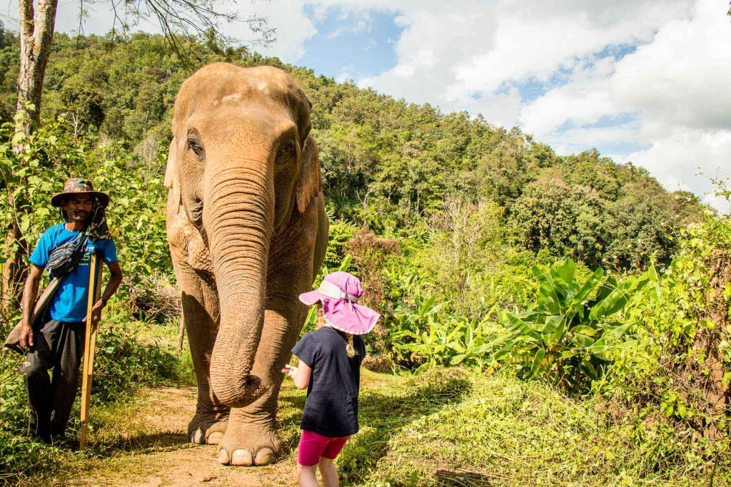 Best things to do in Chiang Mai with kids -  Elephant Nature Park