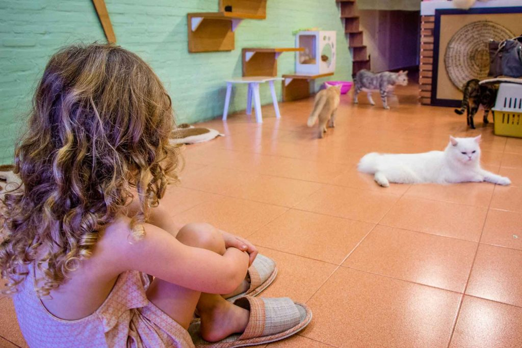 Cat Cafe in Chiang Mai Thailand with kids