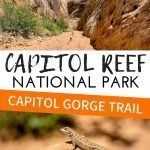 Capitol Gorge Trail in Capitol Reef National Park is a great hike for kids. This family friendly trail is easy and fun for kids. Make some time to hike Capitol Gorge Trail with kids! #utah #capitolreef #utahnationalpark #utahwithkids #hikingwithkids
