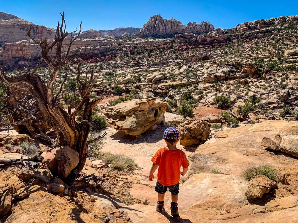 Capitol Reef National Park hikes with kids