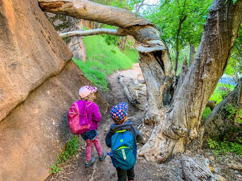 Zion Canyon Grotto Trail with Kids