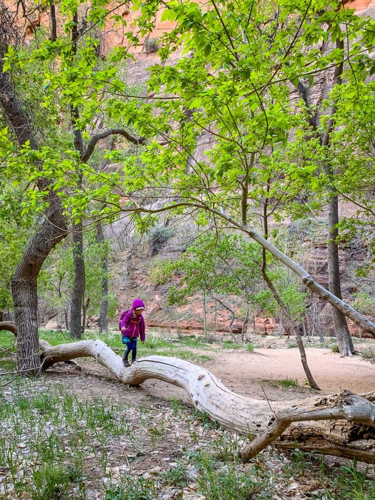 Hiking trails in Zion Canyon National Park - Zion river hike