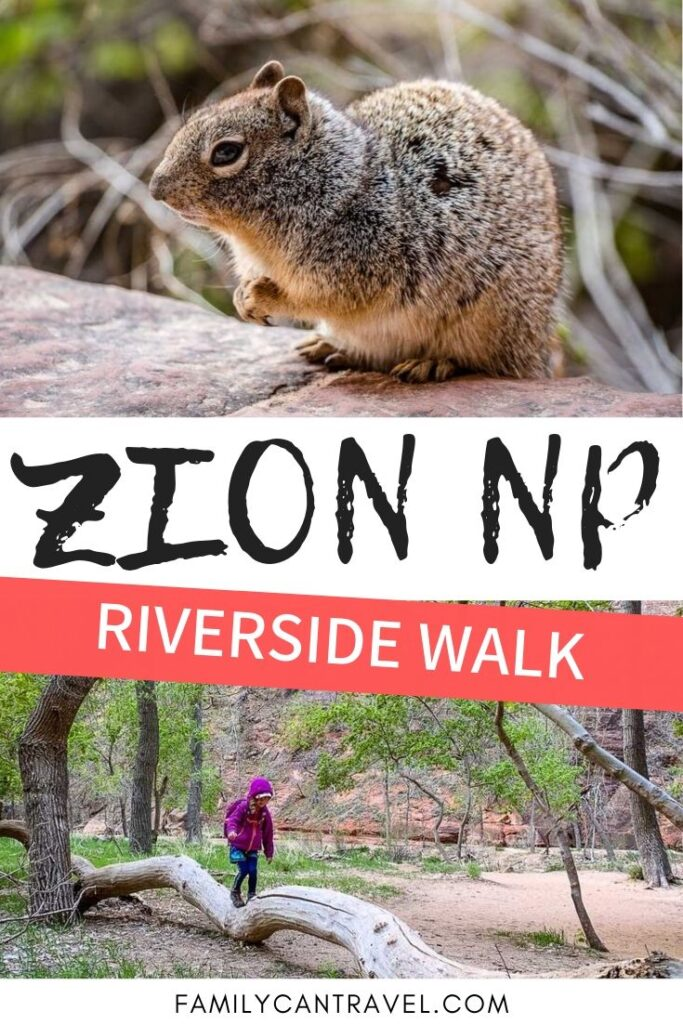 Whether you plan to hike the Narrows or not, the Riverside Walk is bound to impress! It's a great family friendly hike in Zion National Park!