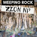 Looking for a family friendly trail in Zion National Park with Kids? Weeping Rock Trail is a great hike to do with kids!