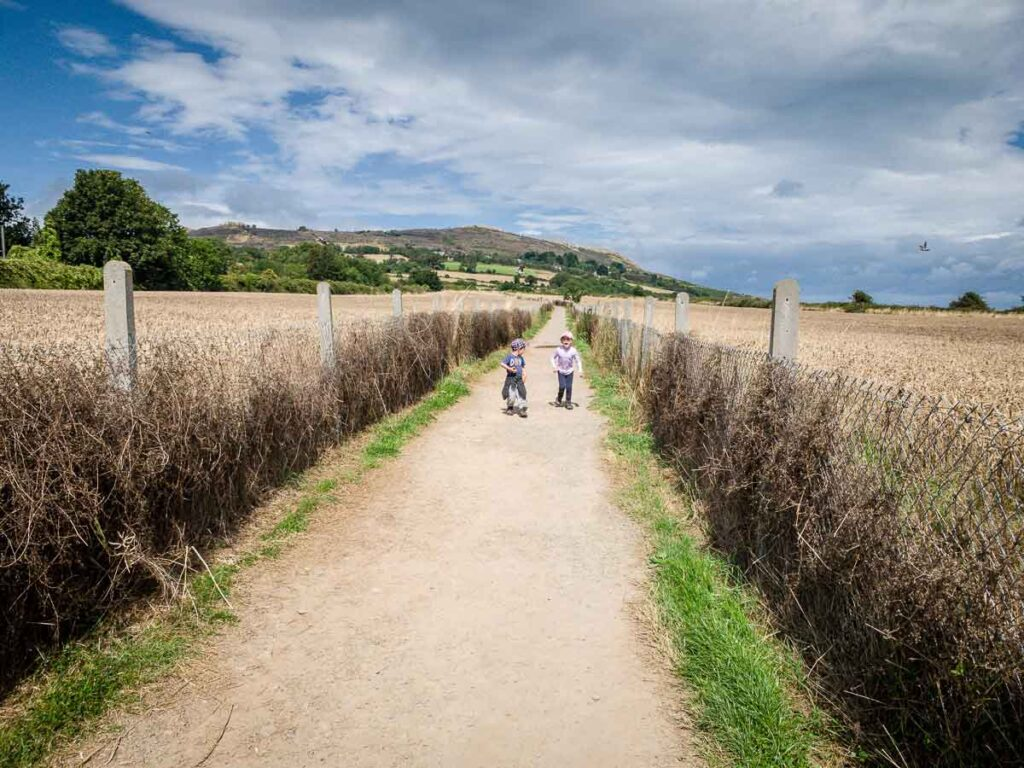 image of kids on a pathway through a wheat field in Ireland
