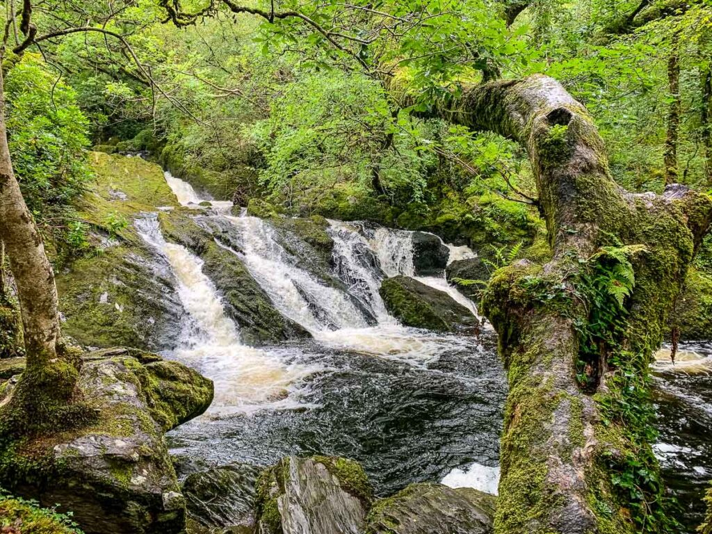 image of waterfall in Glengarriff Woods Nature Reserve