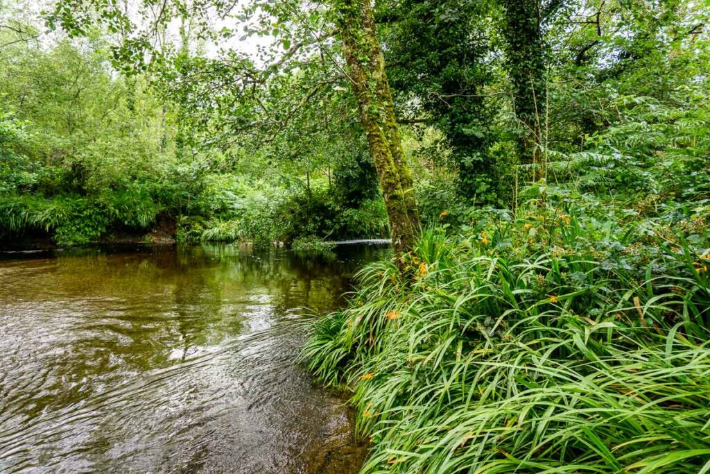 image of river in Glengarriff Woods Nature Reserve