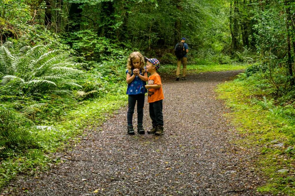 image of kids looking at a bug on a trail in Glengarriff Woods Nature Reserve