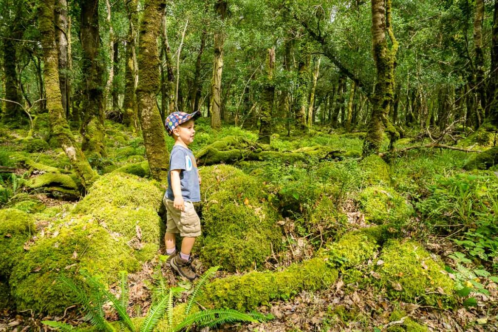 image of boy standing in Rossacroo Forest
