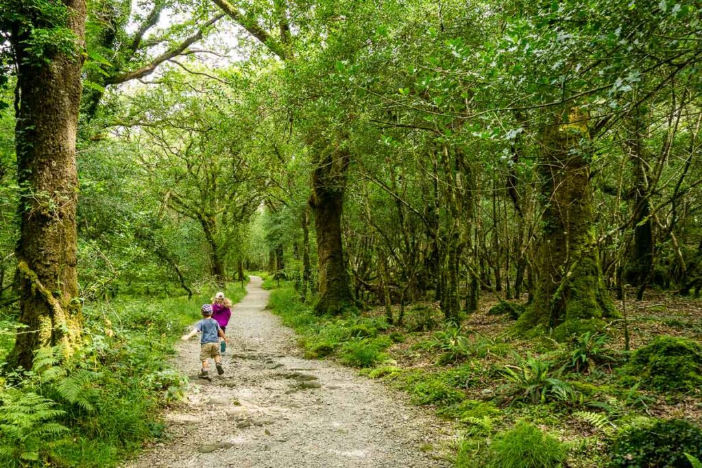 image of two kids walking on the path in Rossacroo Forest Ireland