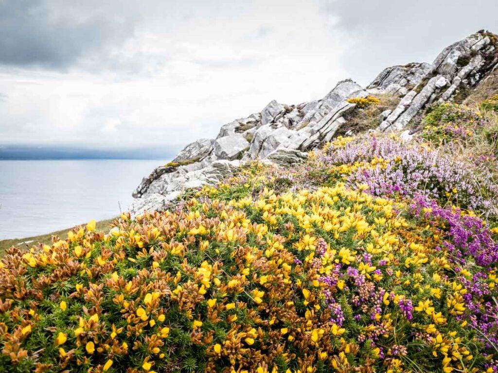 image of wild flowers along Lighthouse Loop Walk on Sheep's Head Peninsula Ireland