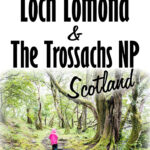 Image of a girl in pink rain jacket walking amongst large trees with text overlay of 5 Easy Walks in Loch Lomond and the Trossachs National Park Scotland
