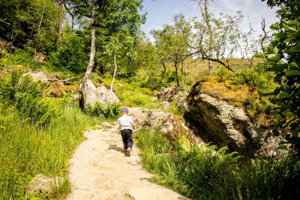 image of boy walking up a hiking trail with grass, trees and large rocks along the trail