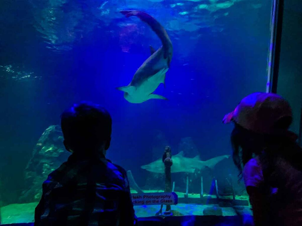 Image of kids at Dingle OceanWorld Aquarium looking at sharks in a tank