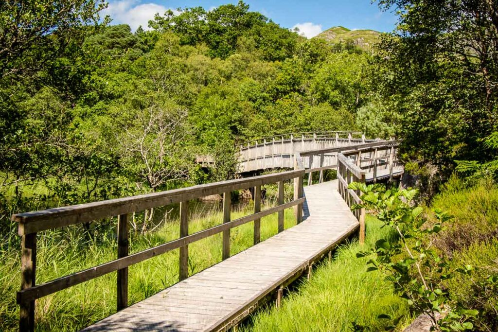 image of wooden boardwalks that are part of the dragonfly trail near the visitor center