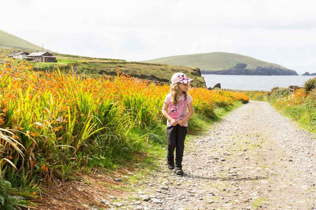 image of girl walking along road with bright orange flowers along the side on Dingle Peninsula