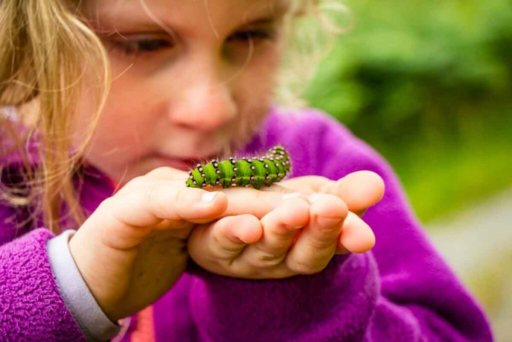 close up image of girl holding a green and pink caterpillar