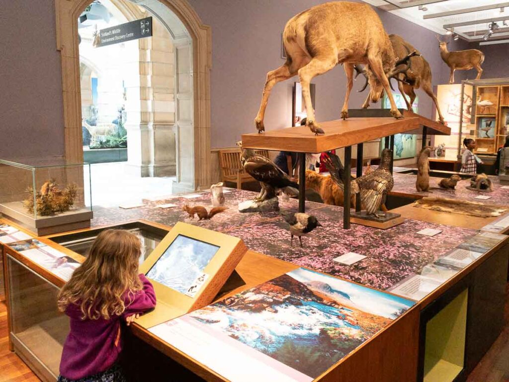 image of girl looking at animal display in Kelvingrove Museum in Glasgow Scotland