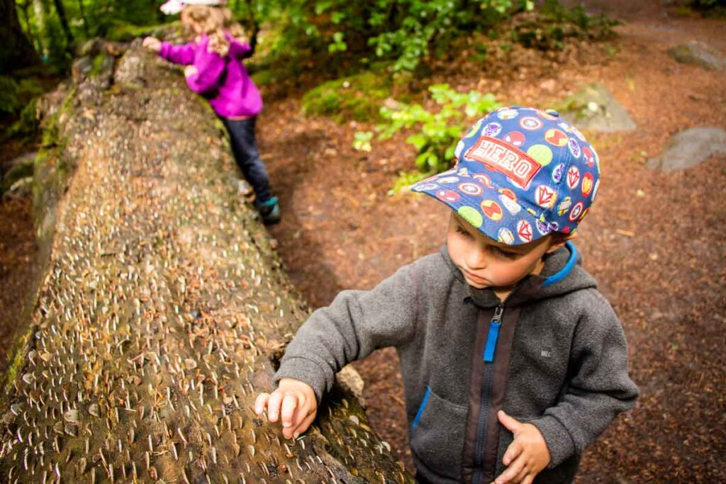 image of kids looking at coins pushed into a large log in Tay Forest Park