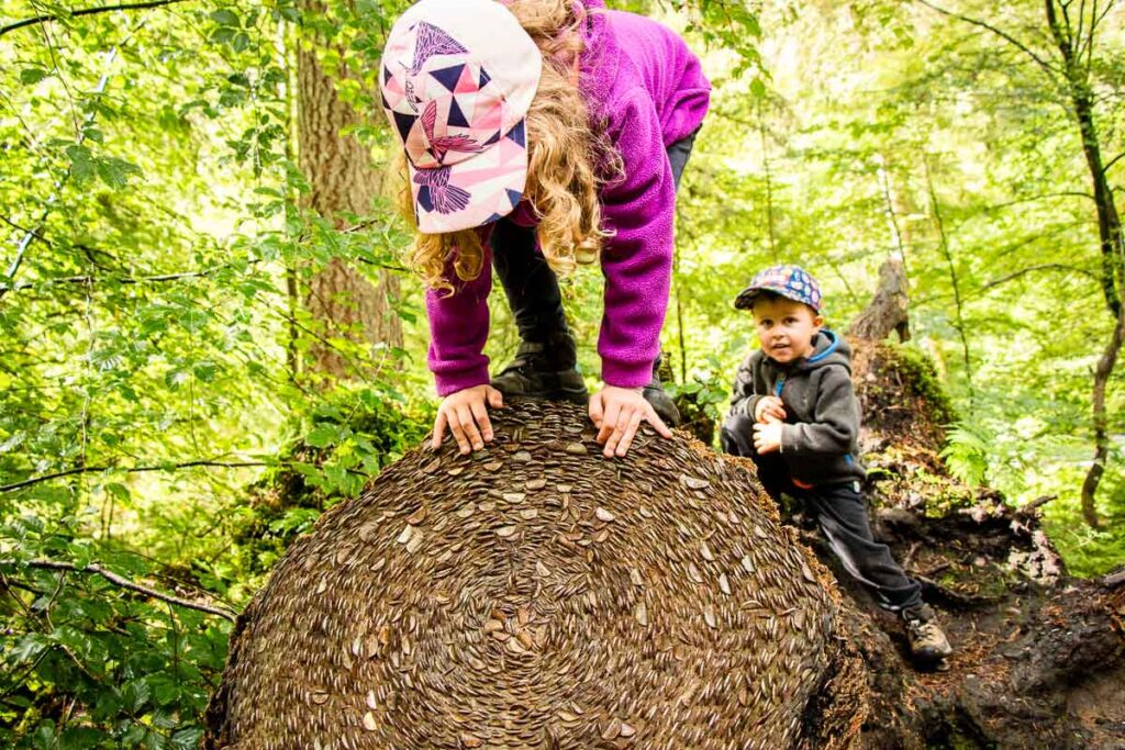 image of two kids on large log that has coins pushed into the end of it in Tay Forest Park Scotland