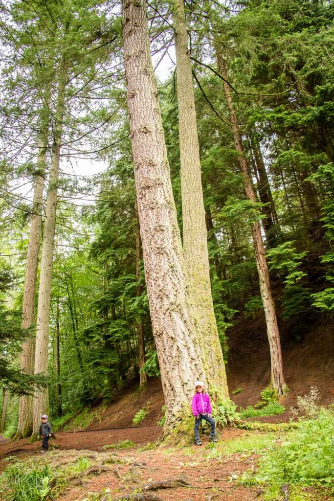 image of kids next to large trees along Tay Forest Hermitage Woodland Walk