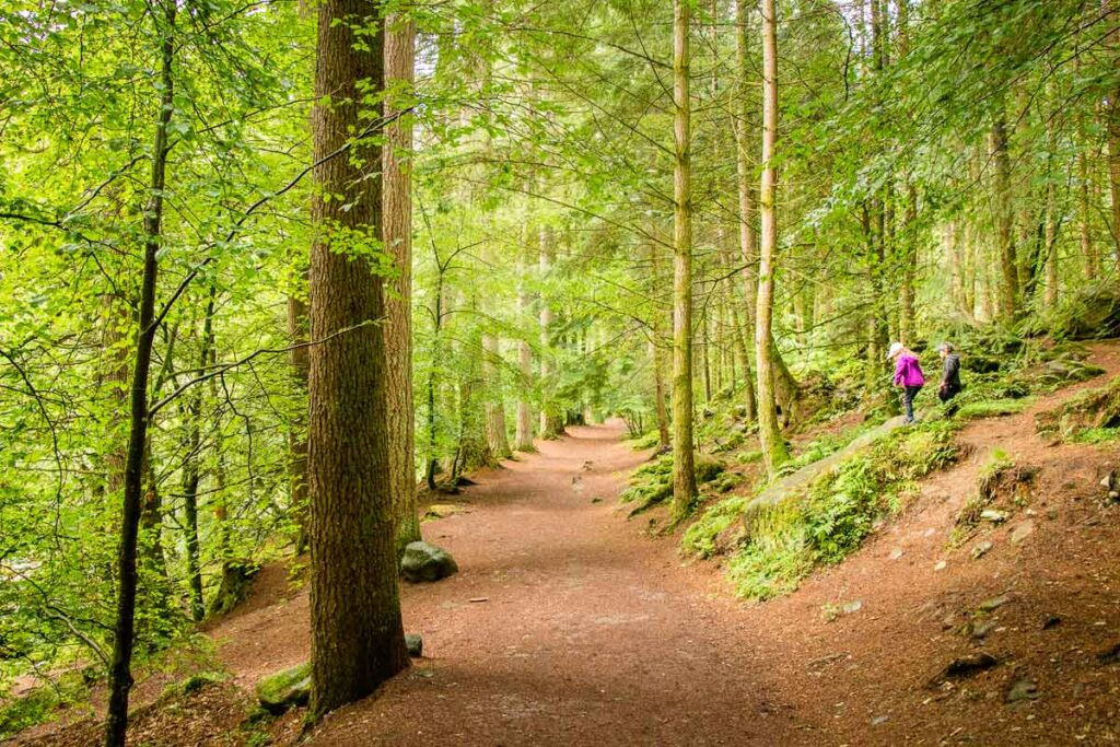 image of trail through the forest in Tay Forest Park Scotland