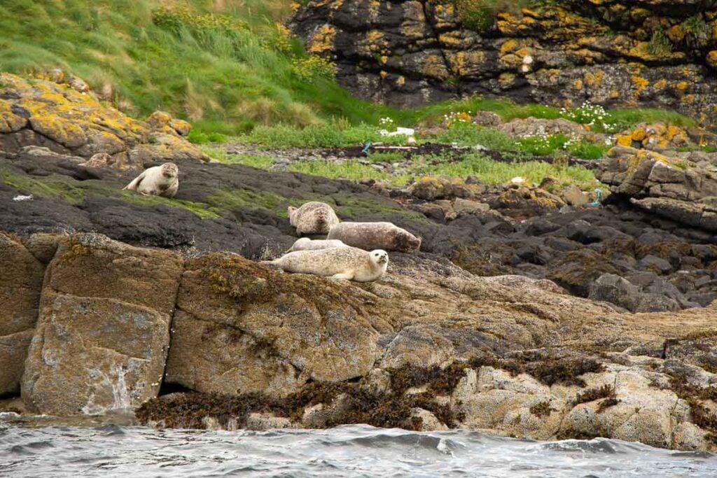 image of seals on Isle of Skye