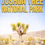 Best hikes in Joshua Tree NP